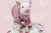 London: Pandora the pretty in pork piglet