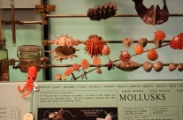 New York Squids in the city: Mollusc at the Museum