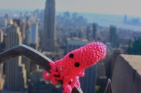 New York Squids in the City: Tentacles at the Top of the Rock